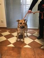 Hledá se majitel nebo zájemce o nalezeného psa