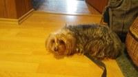 Hledá se majitel psa
