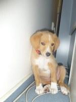 Hledáme majitele nebo nového zájemce o psa