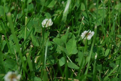 Luční trávníky podpoří biodiverzitu rostlin a živočichů