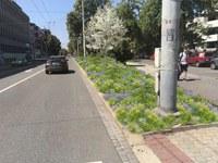 Město zahajuje práce na rekultivaci zeleně na Sokolské třídě