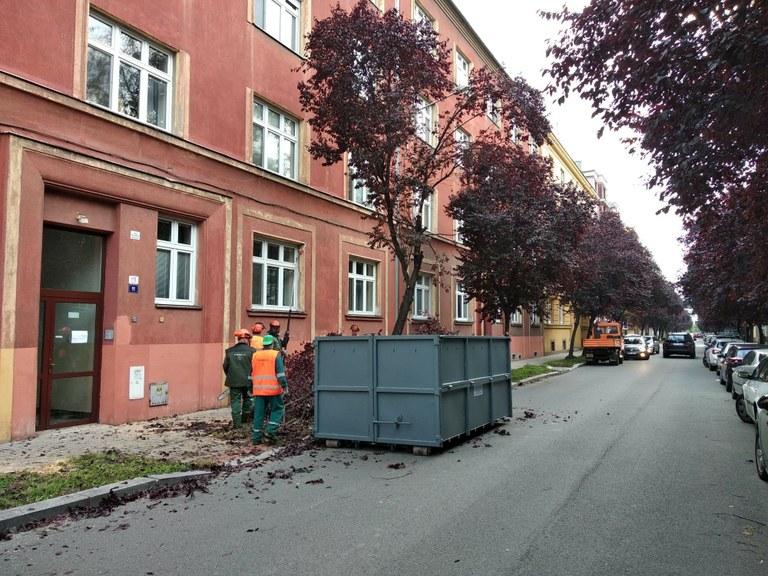 Nemocné stromy na Zborovské ulici nahradí zdravé