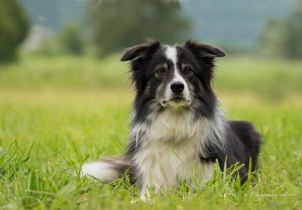 Pejskaři, blíží se termín splatnosti poplatku ze psů
