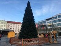 V neděli slavnostně rozsvítíme vánoční strom