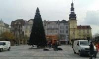 Vánoční strom již stojí na svém místě