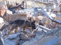 Vypůjčíme domy hasičům pro výcvik jejich psů
