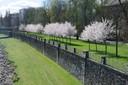 Komenského sady na jaře